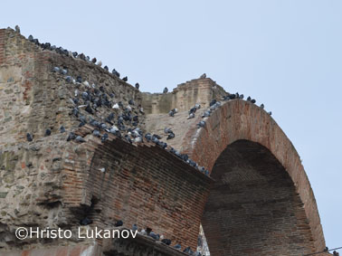 Hristo-Thessaloniki pigeons on the Triumphal arch 2a.jpg